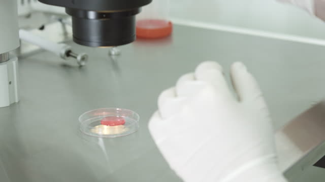 Biological experiment in laboratory video