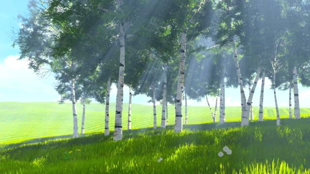 Birch grove edge in spring video