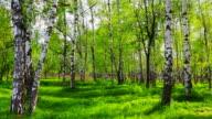 Birch grove video