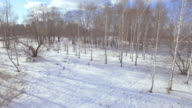 Birch trees in winter - aerial view video