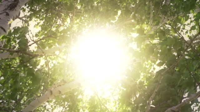 Birch video