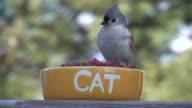 Bird 2 video
