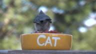 Bird 3 video
