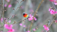 bird and pink flowers video