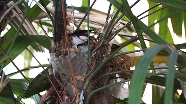 Bird Building nest. video