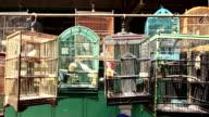 bird cage asian market yogyakarta java indonesia video