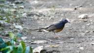 Bird catches a worm. video