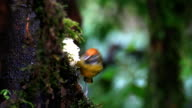 bird eating banana video