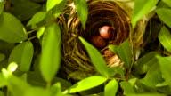 Bird egg in the nest video