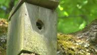 Bird feeding chicks video