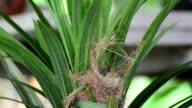 Bird feeding their baby birds in the nest. video