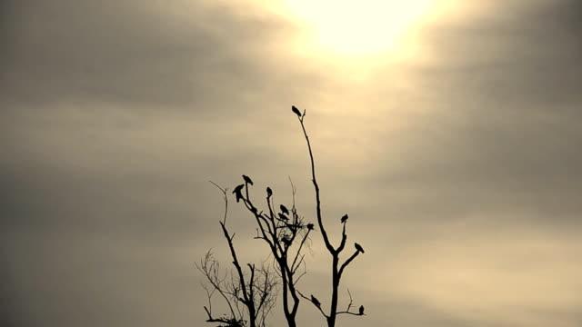 Bird Flock video