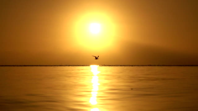 SLOW MOTION: Bird flying above ocean horizon at golden sunset video