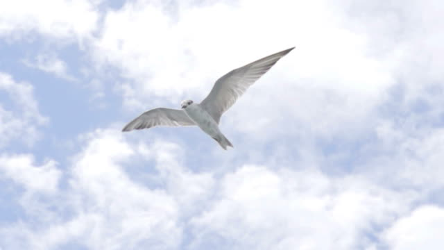 Bird Freedom Fly (Super Slow Motion) video