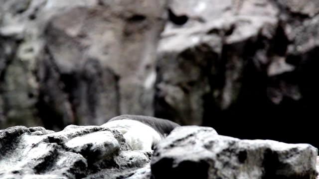 A bird hiding over a rock video
