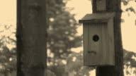 HD: bird house video