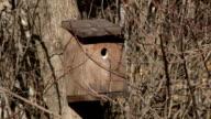 bird house video