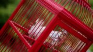 bird in a cage,realistic decoration video