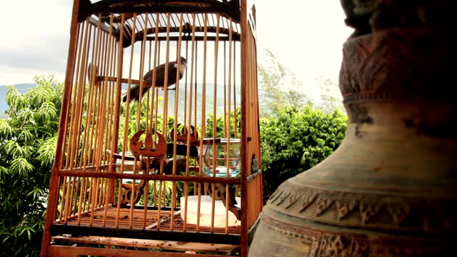 bird in cage video