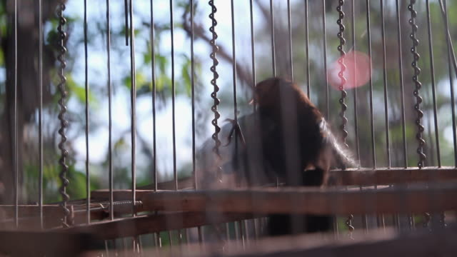 Bird in  cage. video