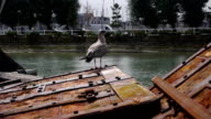 Bird in the harbor in Trouville, France video