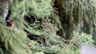 Bird nature video
