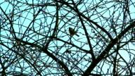 bird on branch video