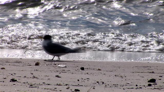 bird on the shore video