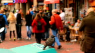 Bird on Trash Can by Busy City Sidewalk video