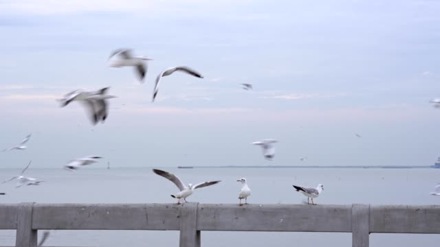 Bird perch on bridge rail video