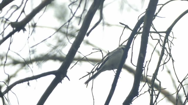 bird sitting on a branch slow motion video video