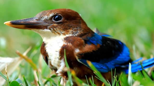 Bird standing on a garden. video