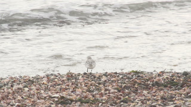 Bird Standing on Edge of Water on Shells video