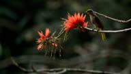Bird suching flowers video