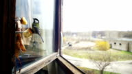 Bird Titmouse Eats Bread and Lard on a Wooden Window Sill. Slow Motion video