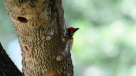 Bird video