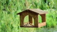 Birdfeeder video