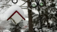 Birdhouse Cover in Snow Seamless Loop video