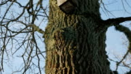 birdhouse hanging on a tree and helping birds in the winter video