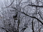 Birdhouse in Tree Branches after Ice Storm video