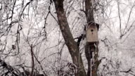 Birdhouse in Winter Forest video