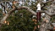 Birdhouse Wind Chime video