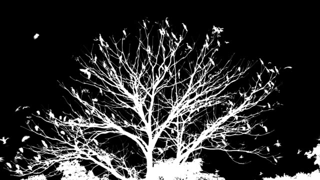 Birds and tree video