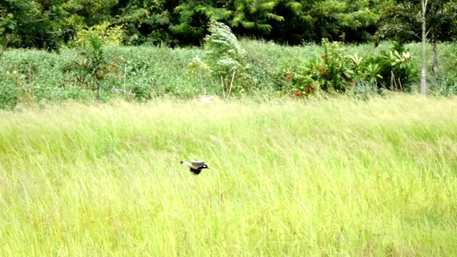 Birds are flying video