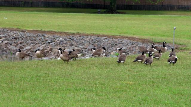 Birds by a Pond video