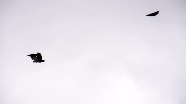 Birds Circle in a Cloudy Sky video