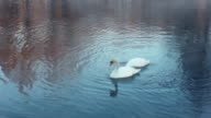 Birds couple. White swans swimming on river. Mist on winter cold river video