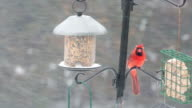 Birds Feeding, eating seeds in winter time video