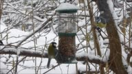 birds feeding video