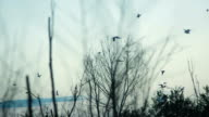 Birds Fly Above The Trees video